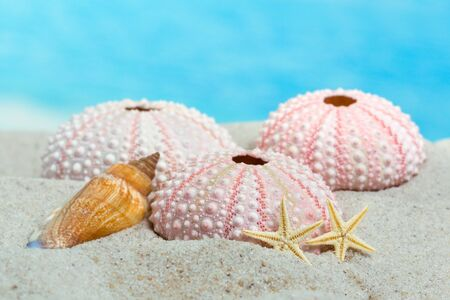 urchin: Fine detail of pink textured sea urchin skeletons and starfish on beach