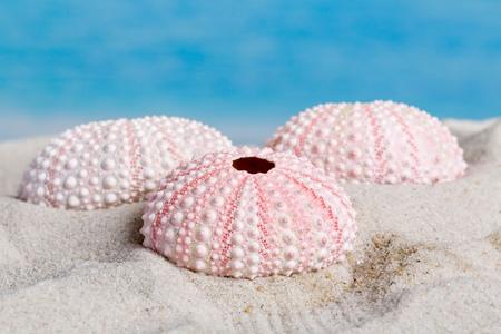 urchin: Fine detail of pink textured sea urchin skeletons