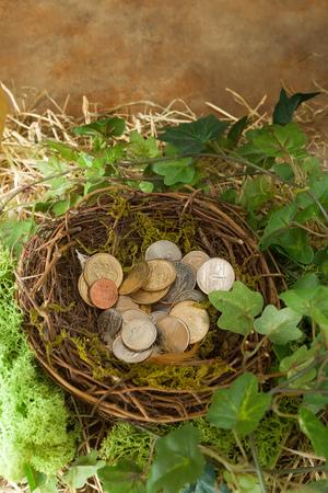 dollaro: Saved money hidden in a birds nest Archivio Fotografico
