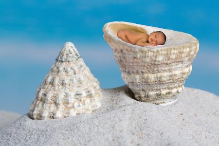 Trochus maculatus seashell lying on a sandy beach, with a baby in it.