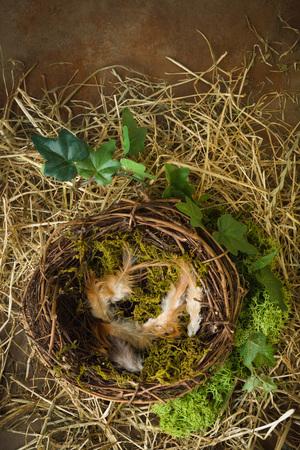 birds nest: Empty birds nest with moss and hay