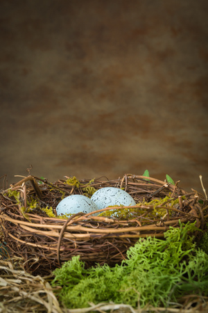 birds nest: Blue speckled eggs lying in a birds nest Stock Photo