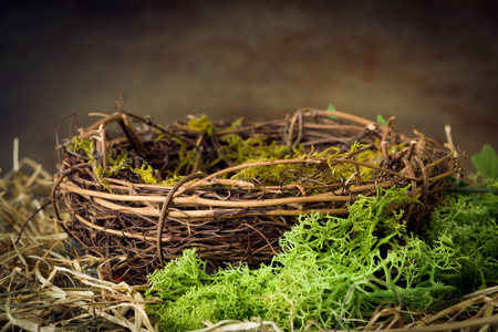 nido de pajaros: nido de p�jaro vac�a con musgo y heno