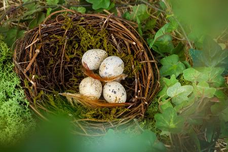 nido de pajaros: Ver a trav�s de las hojas borrosa en el nido de un p�jaro con los huevos azules Foto de archivo