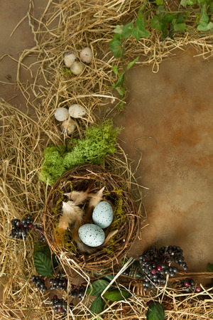 birds nest: Border frame image made of berries, spring leaves and a birds nest
