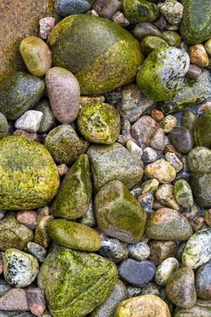 boulder: Beach boulders covered in seaweed making a colorful background