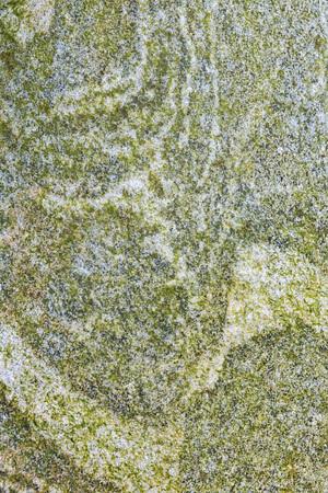fungi: Textured pattern of fungi on weathered rocks
