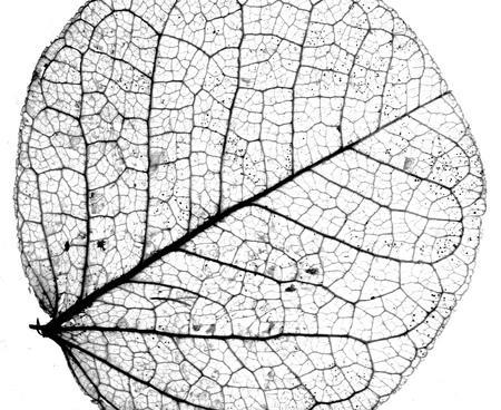 Background textured image made of delicate leaf veins Banque d'images