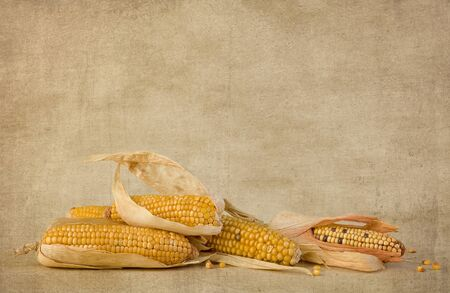 Still life with dried corn cobs on a grunge wallpaper backdrop