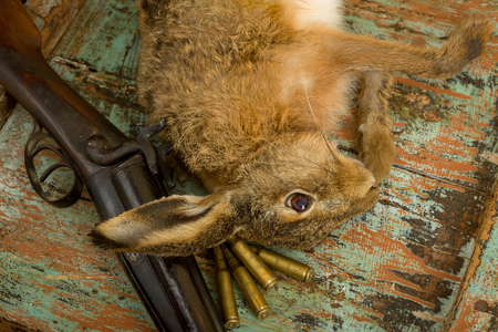 Old hunting scene with dead hare, rifle and bullets