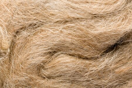 unprocessed: Raw flax as it is used in paper industry and for making linen cloth Stock Photo