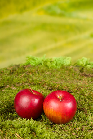 gnomos: artificiales fondo de musgo y las manzanas para ser utilizado como telón de fondo para los gnomos y hadas