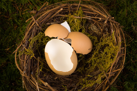 backdrops: Empty eggs in a birds nest to be used as a digital backdrop for newborn photography.