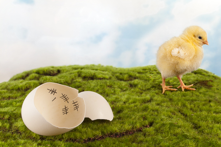 Baby chick and eggshell with calendar for counting the days
