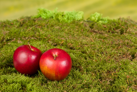 Artificial background with moss and apples to be used as backdrop for gnomes and fairies