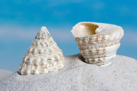 Trochus maculatus seashell lying on a sandy beach Stock Photo