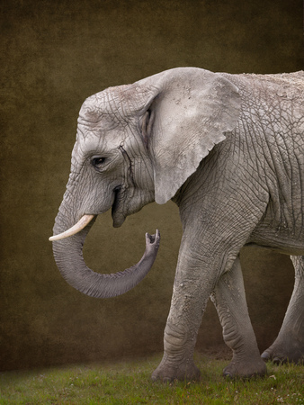 Elephant for digital composites suitable for baby photoshop 스톡 콘텐츠