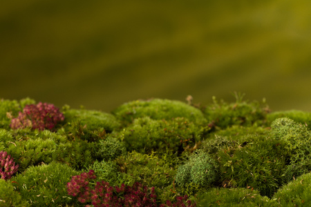 Digital background material made of real fresh moss and horizon to blurry green