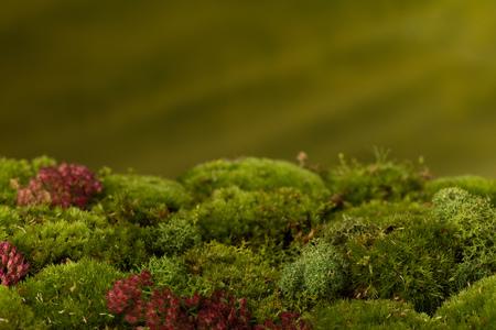 Materiale di sfondo digitale fatto di vero muschio fresco e orizzonte di verde sfocato