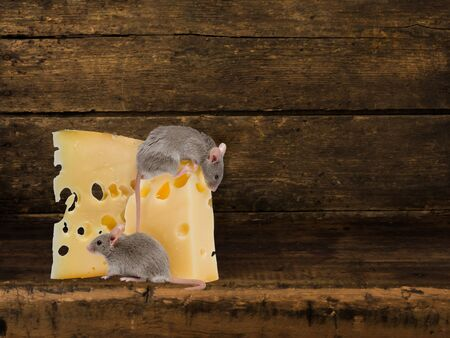 Digital backdrop for composite images of an antique wooden shelf with cheese and mice  Reklamní fotografie