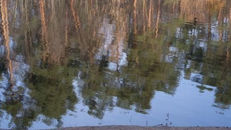 pine trees: Pine trees are reflected in the water.