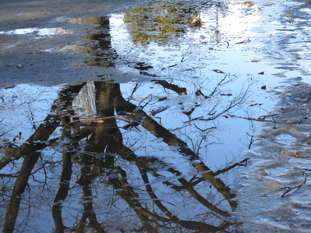 held down: The trees were reflected in the puddle on the road.