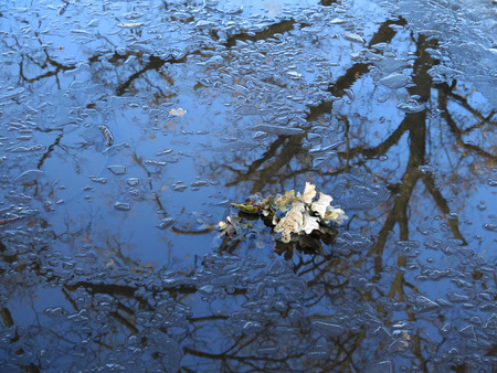 held down: A branch of an oak is floating in the water surrounded by small pieces of ice.