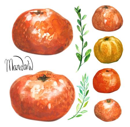 mandarin orange: Watercolor colorful mandarin,  orange set. Hand drawn. Isolated on white background Stock Photo