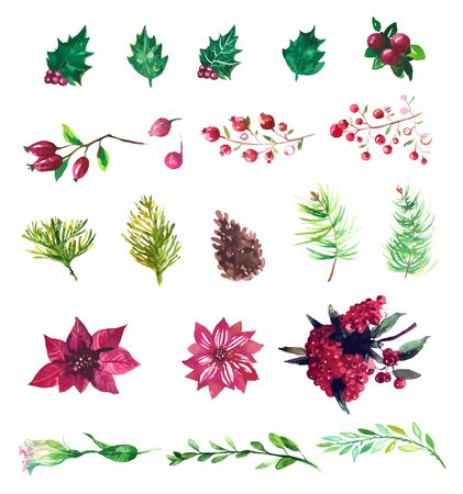 holly day: Set of winter plants, flowers and berries. Could be used for Christmas design. watercolor. Illustration