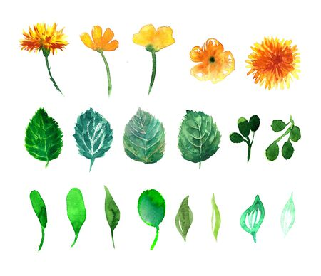 nasturtium: Beautiful nature with flower dandelion fluff. Floral with summer or spring flowers. Stylish trendy wallpaper.