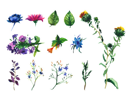 potbelly: Set of watercolor drawing wild flowers, herbs, floral elements, hand drawn illustration