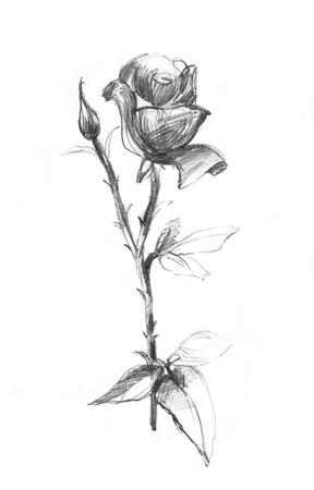 Sammlung Von Ginkgo Blätter Zeichnung Und Skizze Mit Line Art Auf
