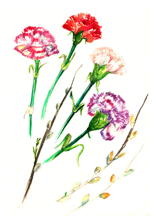 watercolor card with a picture of the clove flower. carnations flowers