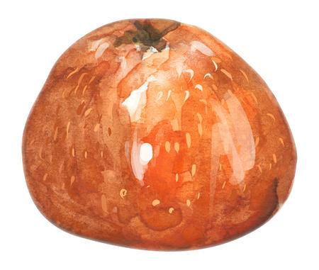 Mandarin hand drawn watercolor, on a white background. illustration. Standard-Bild - 112390415