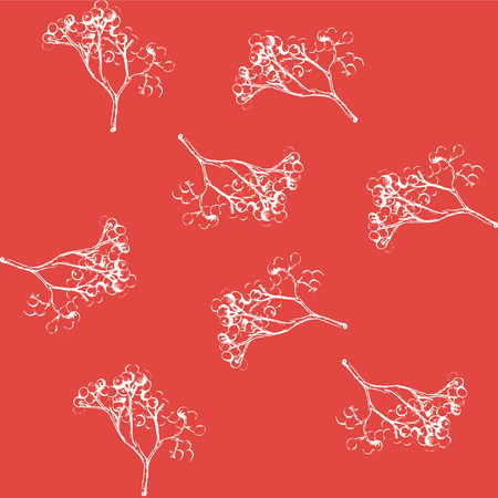 ashberry: Rowan. a sprig of mountain ash. sketch of rowan twigs berries.