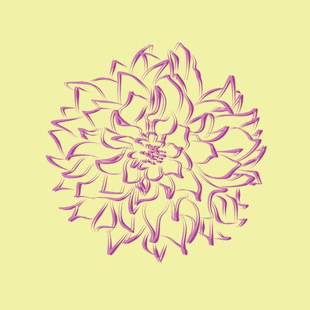 aster: stylized chrysanthemum flower drawn vector