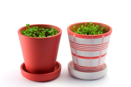 Two colored flower pots  isolated over white