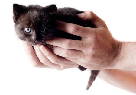 Shot of little cute black kitten isolated on white photo
