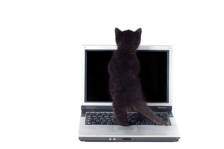 Shot of little cute black kitten isolated on white Stock Photo - 7293525