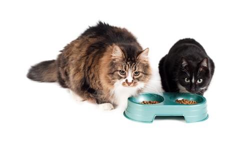 Manger des chats