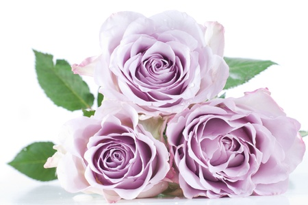 Pastel shade roses Stock Photo