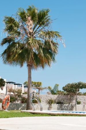 Palm tree near swimming pool photo