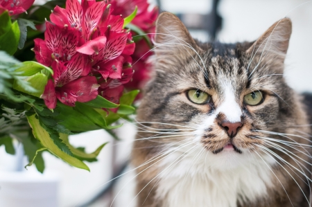 Portrait of cat with bunch of flowers photo