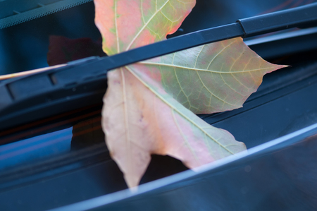 Autumn maple leaf on the windshield/ Shallow depth of field. Stock Photo - 22224601