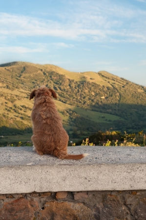 Dog sitting and watching from Spain (Andalusia) to Morocco Stock Photo - 22347513