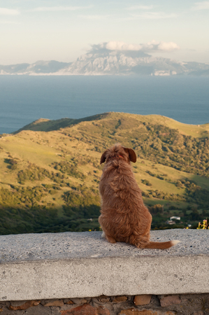 Lonely dog sitting and looking at the mountains and the sea photo