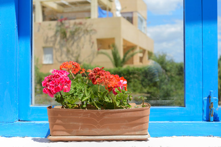 Red flowers in pot photo