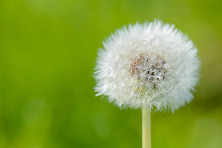 blowball: Blowball with a green background