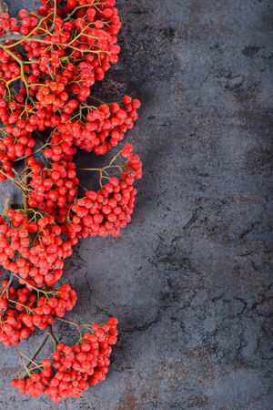 Bunch of red rowan berries photo