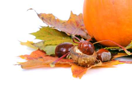 Autumn maple leaves with chestnuts and pumpkin photo